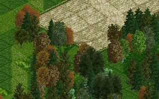 sac's trees